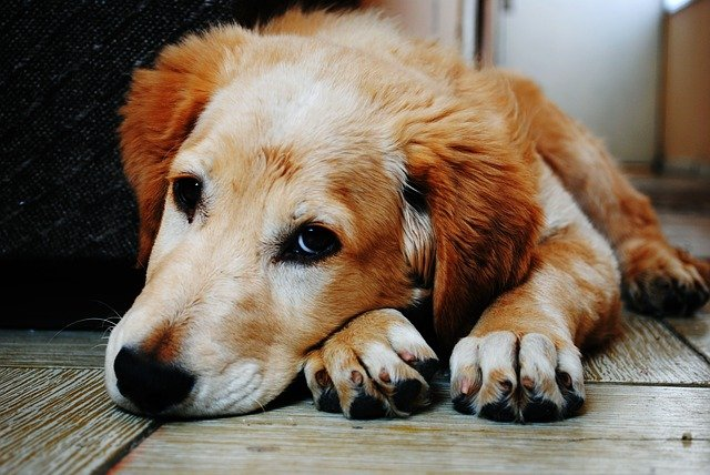 Signs Of A Depressed Dog